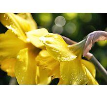 Sunny splash Photographic Print