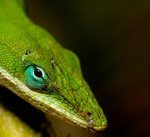 The Turquoise Eye by Phillip  Simmons