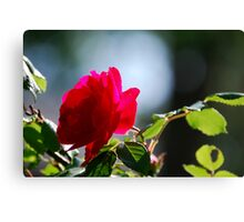 Rose Mary Canvas Print