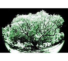 big old tree, Northbridge, Western Australia. Photographic Print