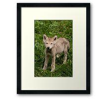 Adorable Me Framed Print
