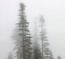 Trees in fog by shilohrachelle