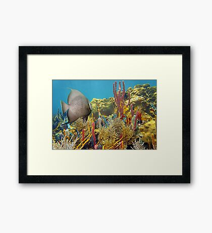 Colorful underwater life in a coral reef Framed Print