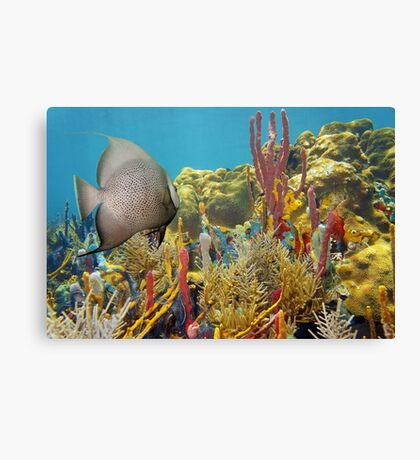 Colorful underwater life in a coral reef Canvas Print