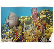 Colorful underwater life in a coral reef Poster