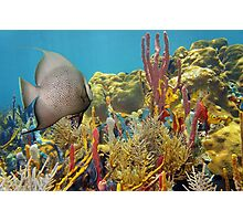 Colorful underwater life in a coral reef Photographic Print