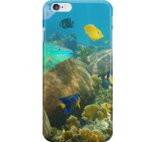 Colorful tropical fish in a coral reef iPhone Case/Skin