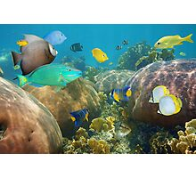 Colorful tropical fish in a coral reef Photographic Print