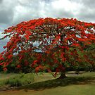 Blushing tree by OksanaAyvaz