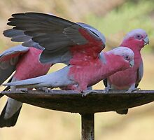Pretty in Pink! by Tainia Finlay