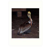 Pelican 0876 Art Print