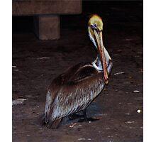 Pelican 0876 Photographic Print