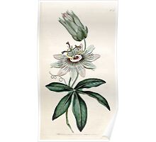 The Botanical magazine, or, Flower garden displayed by William Curtis V1 V2 1787 1789 0064 Passiflora Coerulea, Common Passion Flower Poster