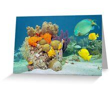 Colors of marine life underwater Greeting Card
