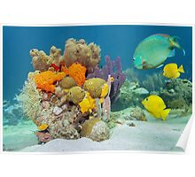 Colors of marine life underwater Poster