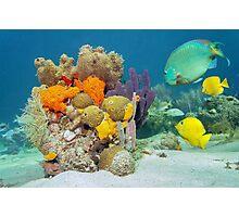 Colors of marine life underwater Photographic Print