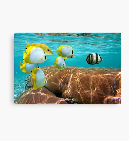 Coral and tropical fish Canvas Print
