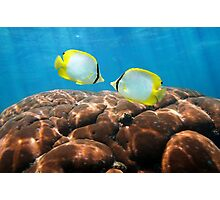 Tropical fish Spotfin Butterflyfish with coral Photographic Print