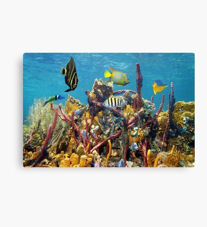 Coral reef underwater colors Canvas Print