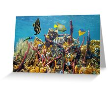 Coral reef underwater colors Greeting Card