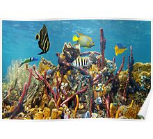 Coral reef underwater colors Poster