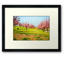 Cherry Blossom Row Framed Print