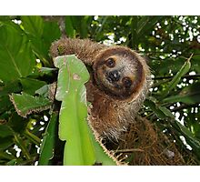 Cute three-toed sloth in a jungle tree wild animal Photographic Print