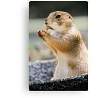 EAT MORE CARROTS! Canvas Print