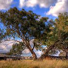 Old wool sheds and old gum tree in Forde, Canberra by Anna Calvert