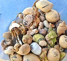 Crab Racers by Jen Waltmon