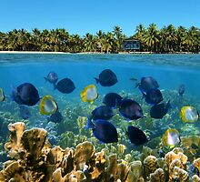 Shoal of fish in a coral reef and tropical shore horizon by Dam - www.seaphotoart.com
