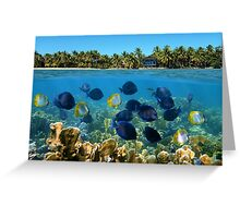 Shoal of fish in a coral reef and tropical shore horizon Greeting Card