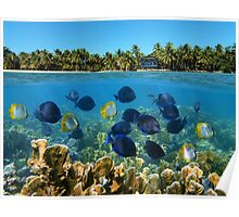 Shoal of fish in a coral reef and tropical shore horizon Poster