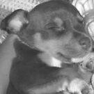 Puppy Dreams by evitaoz