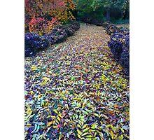 The Walkway to Wonderland Photographic Print