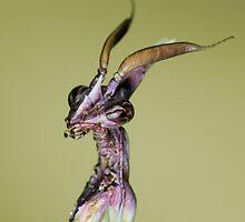 Alien by jimmy hoffman