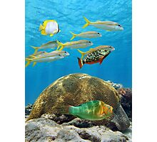 School of tropical fish above coral Photographic Print
