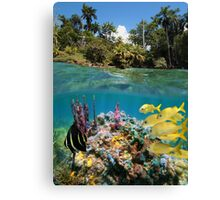 Colorful underwater marine life near tropical coast Canvas Print