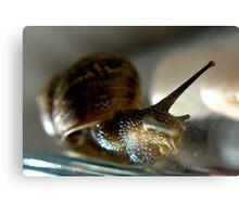 Snail #1 Canvas Print