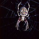 Orb Spider 2 by ceecee