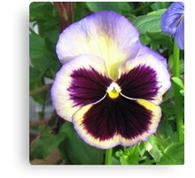 Dreamy Pansy with a Touch of Blue Canvas Print
