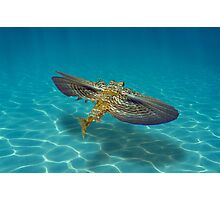 Flying Gurnard fish underwater over sandy seabed Photographic Print