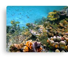 Sea turtle in a coral reef with shoal of tropical fish Canvas Print