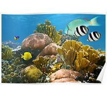Healthy coral reef and colorful tropical fish Poster