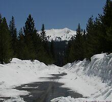 Road Not Taken by CBensemaJohnson