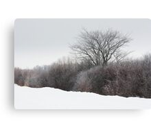 A Tree Among the Brush Canvas Print