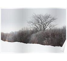 A Tree Among the Brush Poster