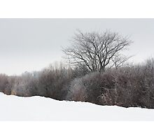 A Tree Among the Brush Photographic Print