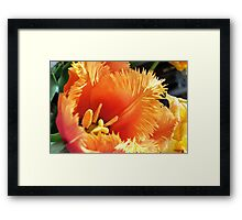 Tulip With A Fringe On Top Framed Print