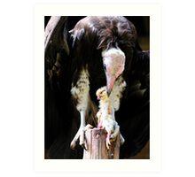 Vulture rips apart its prey Art Print